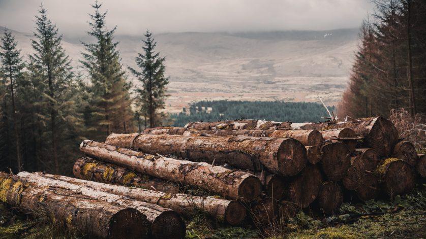 bois durable